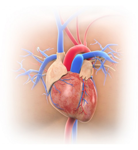 DNA profile evaluates the risk of cardiovascular diseases